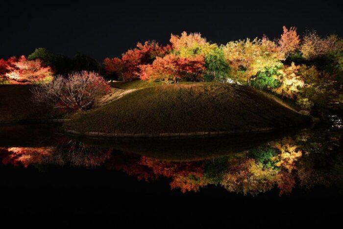 梅小路公園紅葉まつり(ライトアップ)